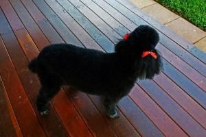 My Dog Has Lost His Bark